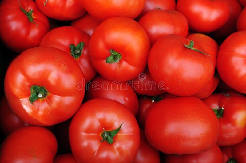 Fermez-vous vers le haut de beaucoup de tomates rouges fraîches photographie stock