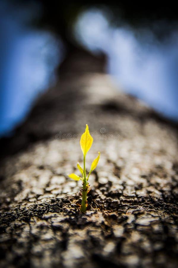 Fermez-vous vers le haut de l'arbre poussant la nouvelle branche images stock