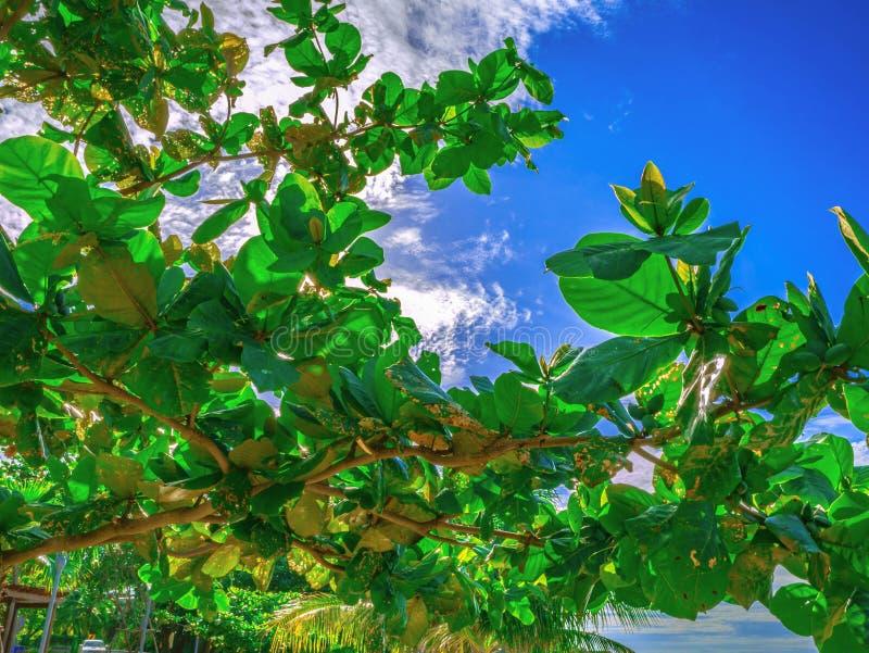 Fermez-vous vers le haut de l'arbre vert sur le beau ciel bleu photographie stock libre de droits