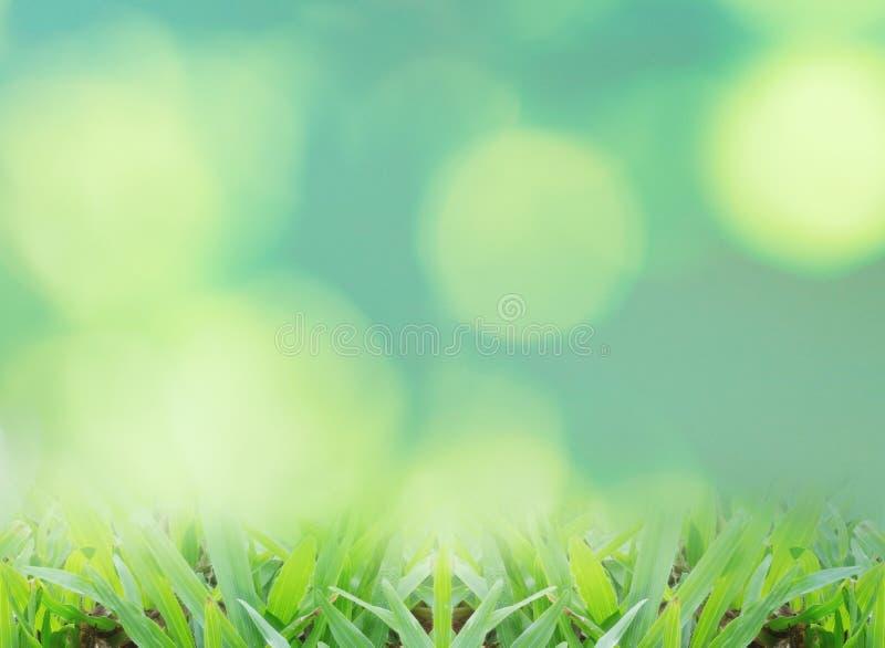 Fermez-vous vers le haut de l'herbe verte images stock