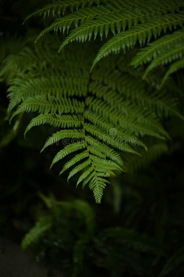 Fermez-vous vers le haut de la belle feuille verte photographie stock