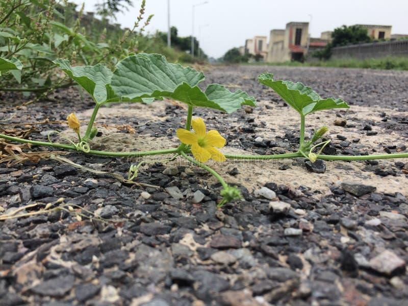 Fermez-vous vers le haut de la belles feuille et fleur vertes image libre de droits