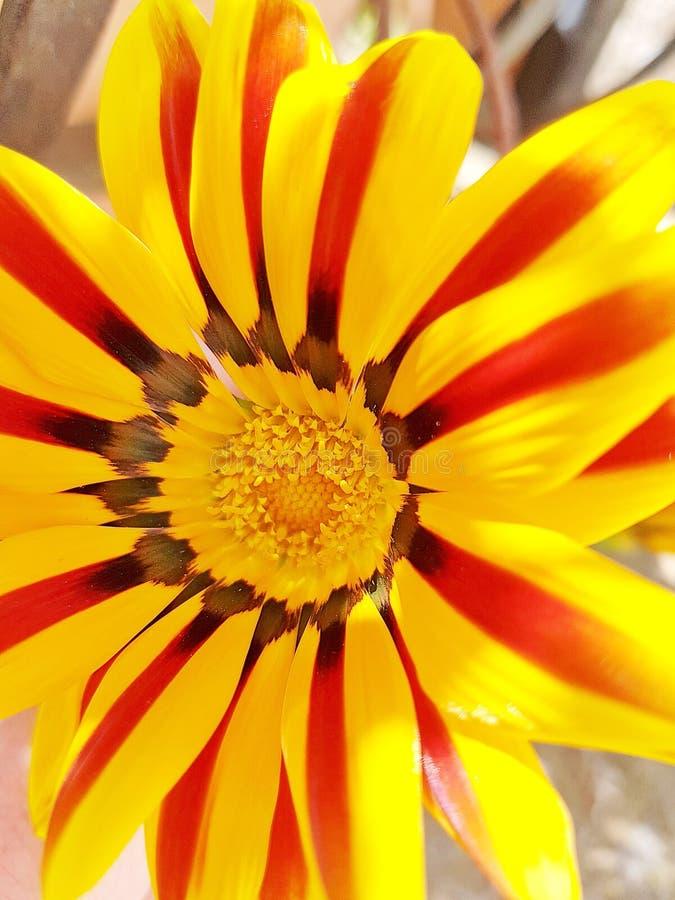 Fermez-vous vers le haut de la fleur jaune images stock