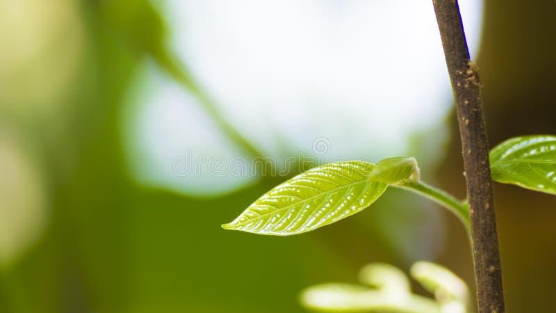 Fermez-vous vers le haut de la jeune feuille avec le fond de tache floue photo stock