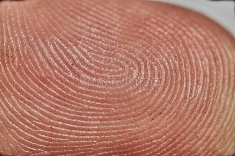 Fermez-vous vers le haut de la macro image d'un doigt humain image stock