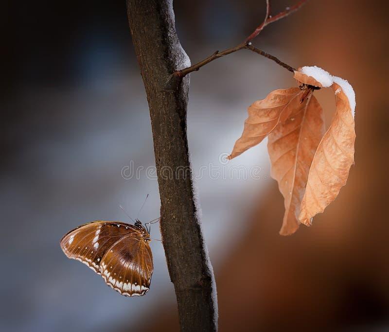 Fermez-vous vers le haut de la photo de Brown et de papillon blanc sur la branche en bois photographie stock libre de droits
