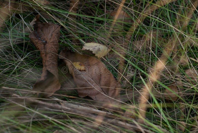 Fermez-vous vers le haut de la photo de l'herbe et des fleurs d'automne au jour images libres de droits