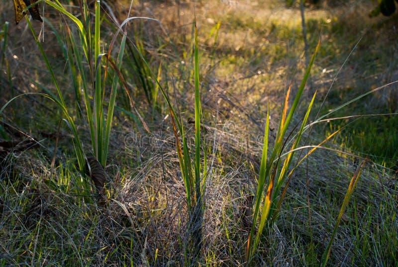 Fermez-vous vers le haut de la photo de l'herbe et des fleurs d'automne au jour photographie stock libre de droits