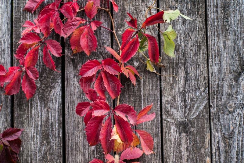 Fermez-vous vers le haut de la photo de l'herbe et des fleurs d'automne au jour image stock