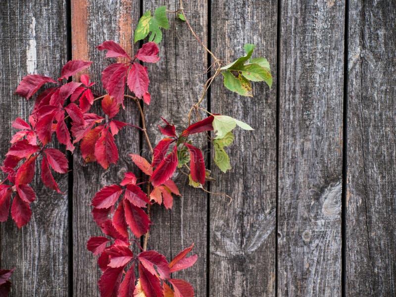 Fermez-vous vers le haut de la photo de l'herbe et des fleurs d'automne au jour photos stock