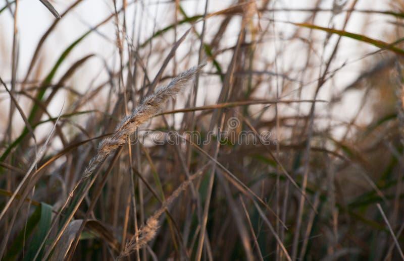 Fermez-vous vers le haut de la photo de l'herbe et des fleurs d'automne au jour photographie stock