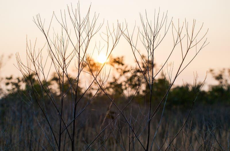 Fermez-vous vers le haut de la photo de l'herbe et des fleurs d'automne au jour photo stock