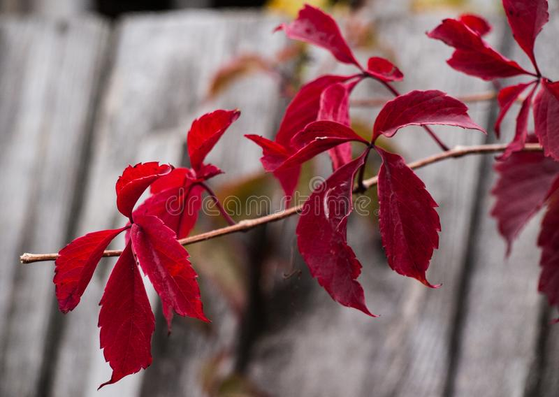 Fermez-vous vers le haut de la photo de l'herbe et des fleurs d'automne au jour images stock