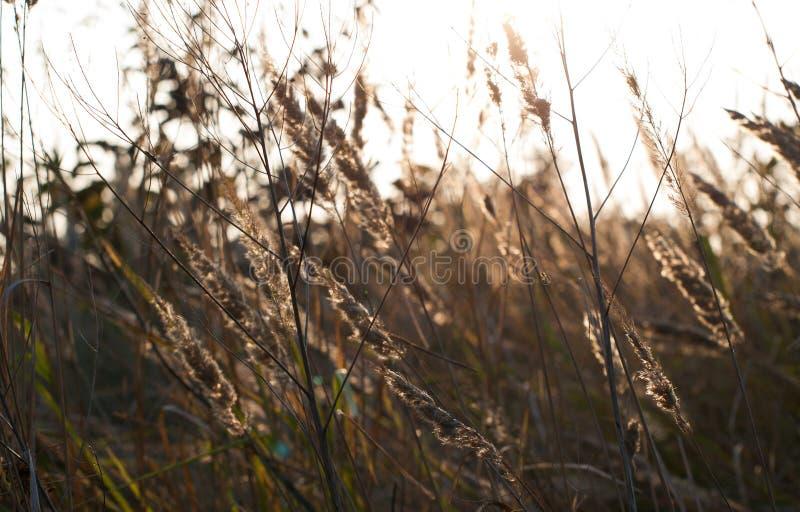 Fermez-vous vers le haut de la photo de l'herbe et des fleurs d'automne au jour image libre de droits