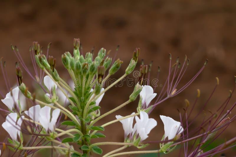 Fermez-vous vers le haut de la tare de fleur image stock