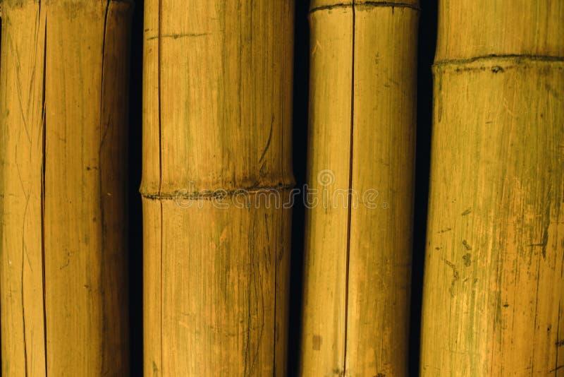 fermez-vous vers le haut de la texture en bambou photos stock