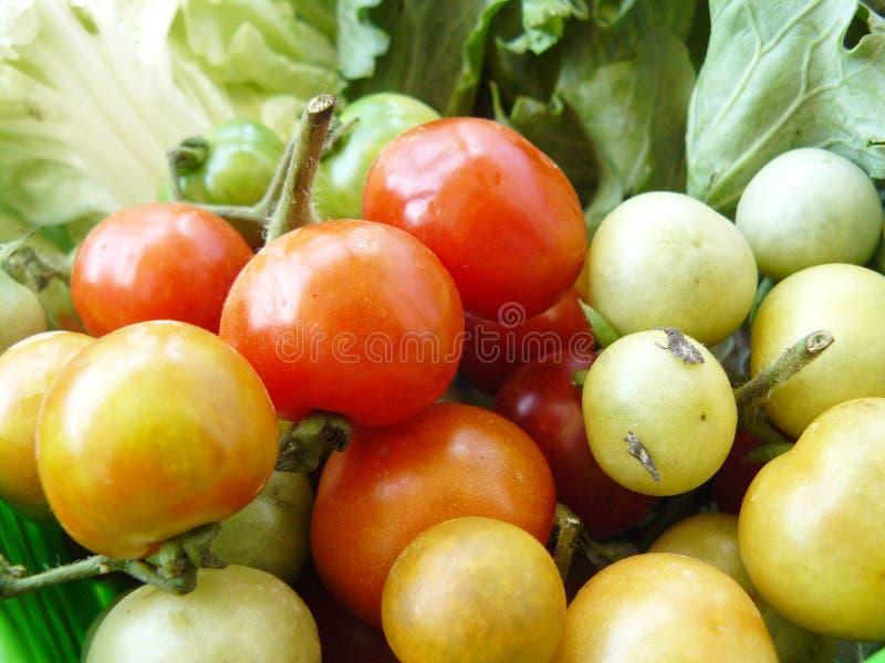 Fermez-vous vers le haut de la tomate de groupe image stock