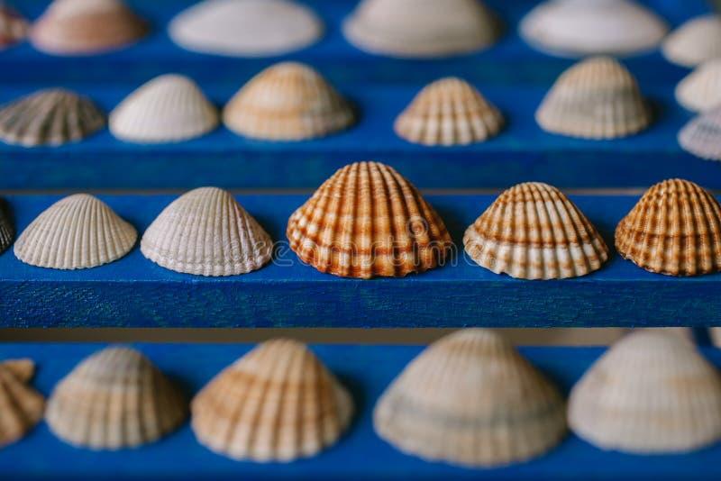 Fermez-vous vers le haut de la vue de beaucoup de différents coquillages sur le fond en bois bleu Ramassage de Seashell images stock