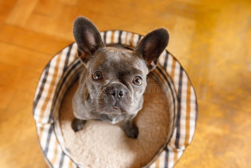 Fermez-vous vers le haut de la vue curieuse de chien image libre de droits