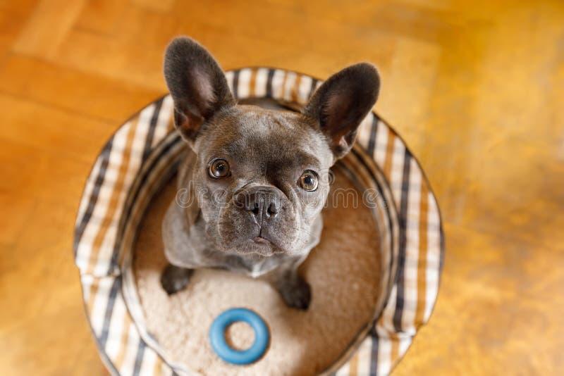 Fermez-vous vers le haut de la vue curieuse de chien photographie stock