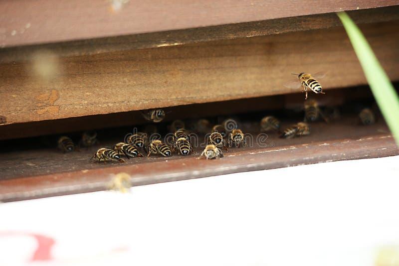 Fermez-vous vers le haut de la vue des abeilles de travail sur des cellules de miel images stock