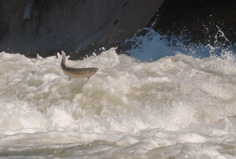 Fermez-vous vers le haut de la vue du truite arc-en-ciel photo libre de droits