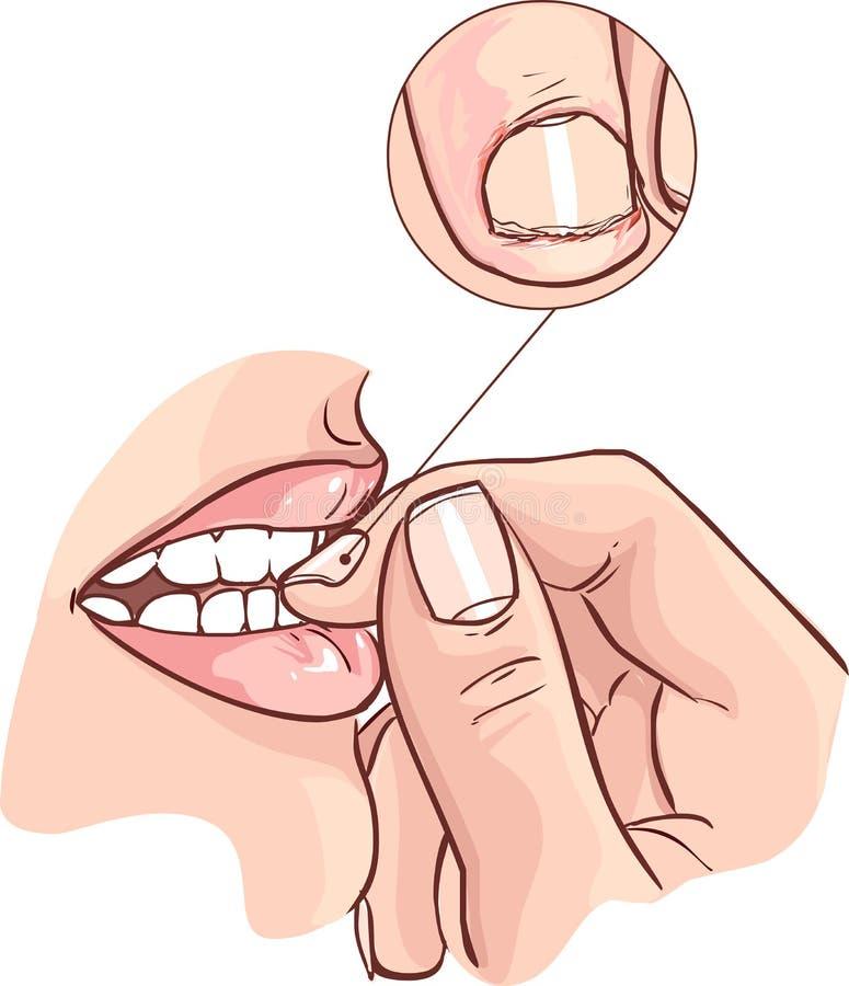 Fermez-vous vers le haut de la vue sur les ongles acérés de femme illustration libre de droits