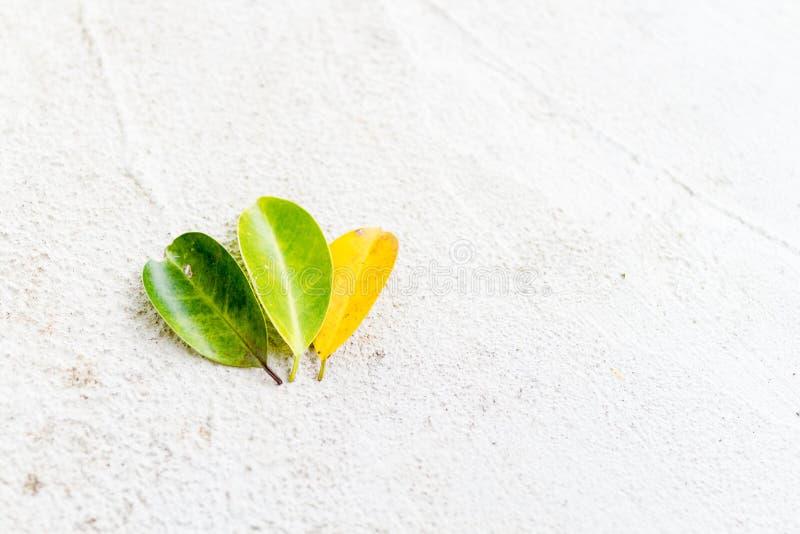 Fermez-vous vers le haut de trois feuilles de couleur photo libre de droits