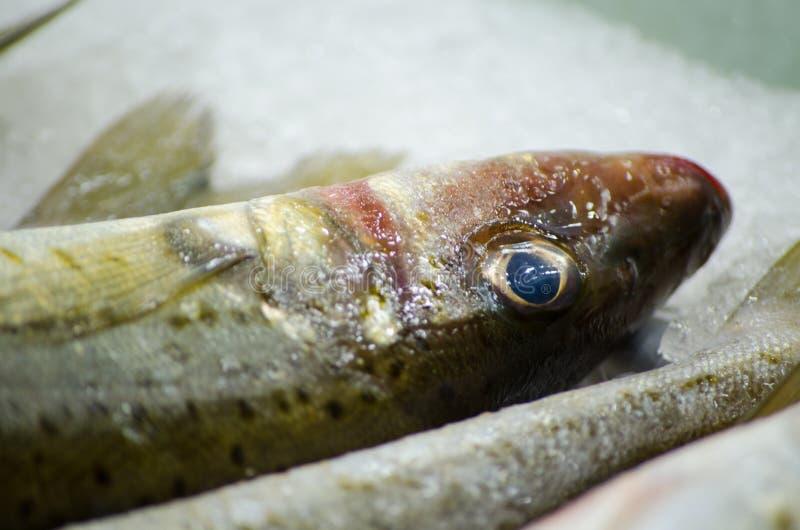 Fermez-vous vers le haut des poissons frais de merlans de sable gelant sur la glace à une poissonnerie image libre de droits
