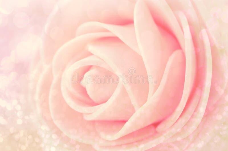 Fermez-vous vers le haut des roses centrales de rose de sépia photo stock