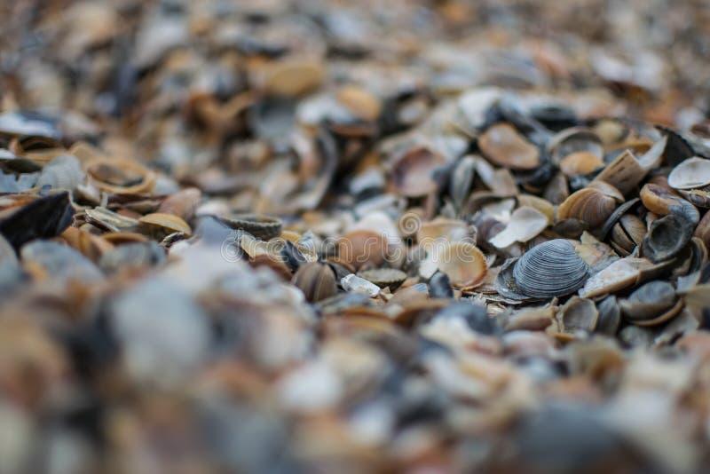 Fermez-vous vers le haut des seashells photographie stock
