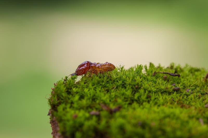 Fermez-vous vers le haut des termites ou des fourmis blanches détruits photos libres de droits