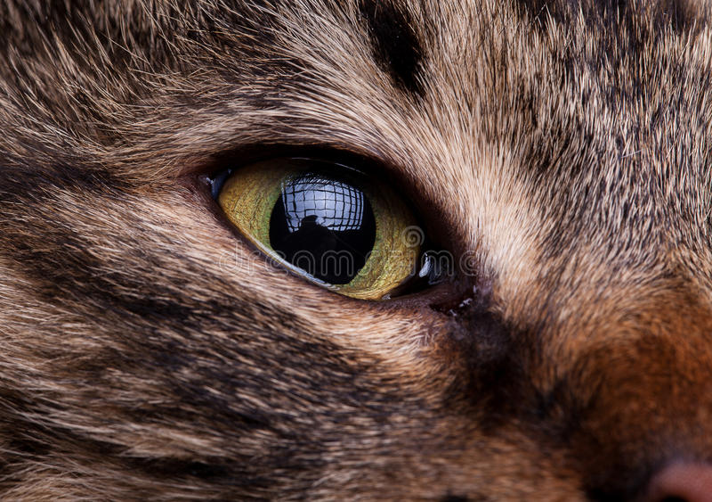 Fermez-vous vers le haut des yeux de chat photo libre de droits