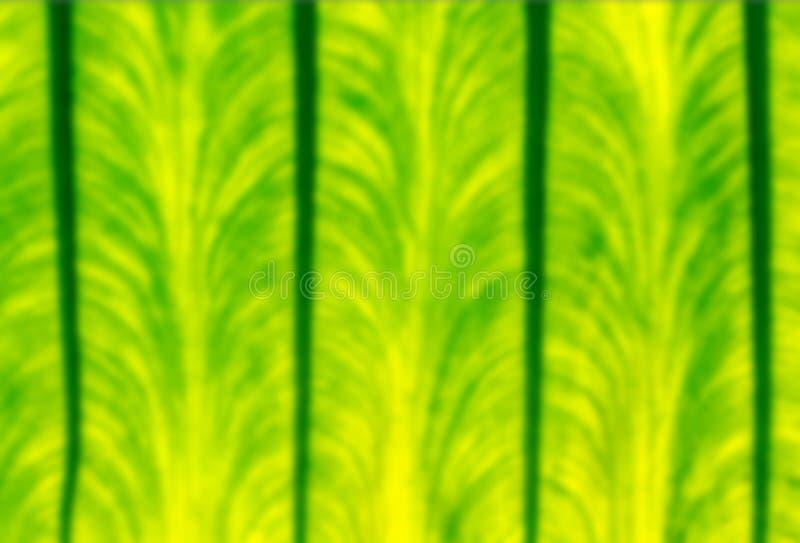 Fermez-vous vers le haut du beau fond defocused de texture de feuille de vert de nature images stock