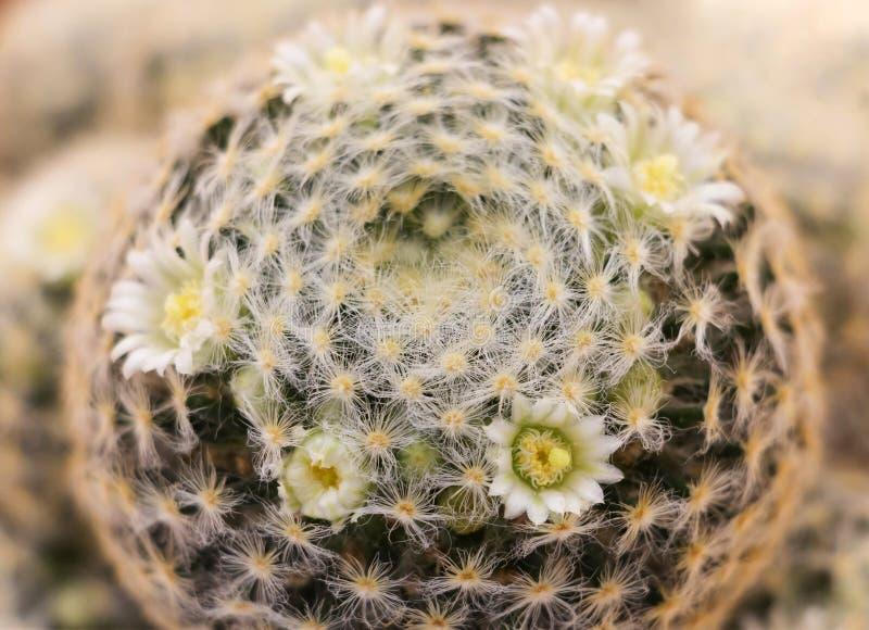 Fermez-vous vers le haut du cactus images stock