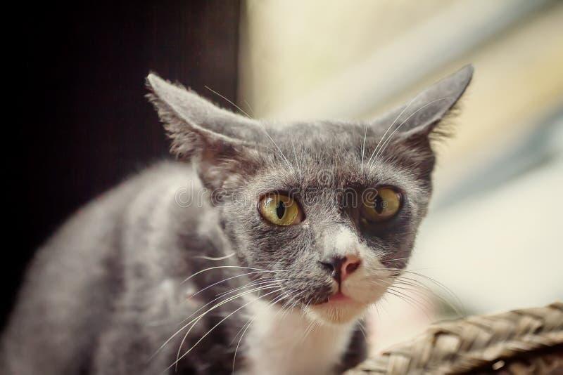 Fermez-vous vers le haut du chat gris de la photo de couleur de vintage photographie stock libre de droits
