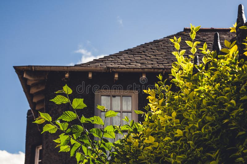Fermez-vous vers le haut du détail d'un vieux cottage anglais avec quelques usines en Th photos libres de droits