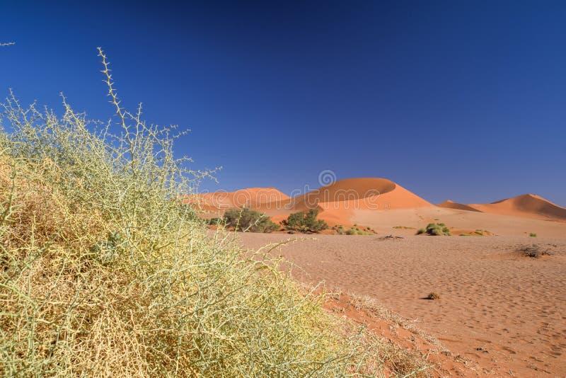 Fermez-vous vers le haut du détail des buissons morts d'herbe dans Sossusvlei près de Sesriem dans le désert de Namib en Namibie, photo stock