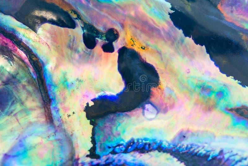 Fermez-vous vers le haut du fond coloré de la coquille d'ormeau, haliotis image stock