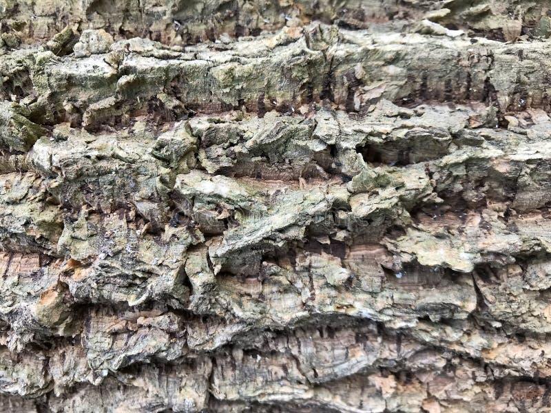 Fermez-vous vers le haut du fond de texture d'arbre de liège, texture d'écorce photos stock