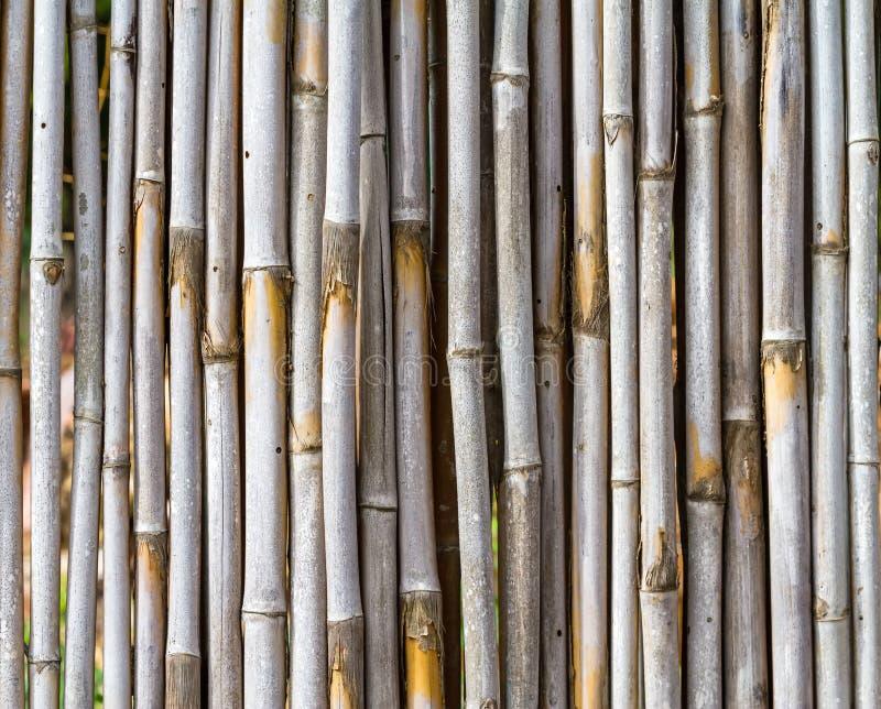 Fermez-vous vers le haut du fond en bambou de barrière photo stock
