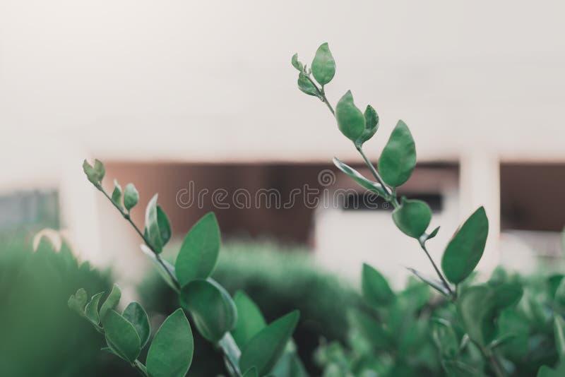 Fermez-vous vers le haut du fond vert de feuilles photo libre de droits