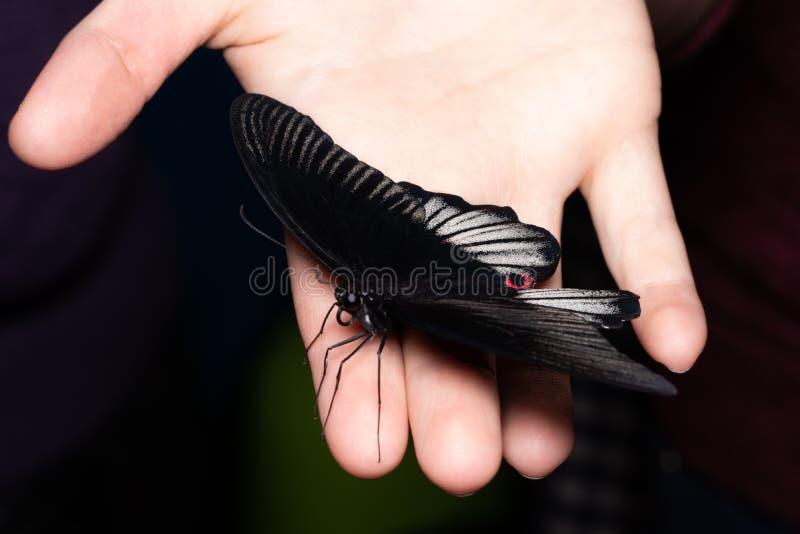 Fermez-vous vers le haut du papillon sur la main de femme Beauté de nature image stock