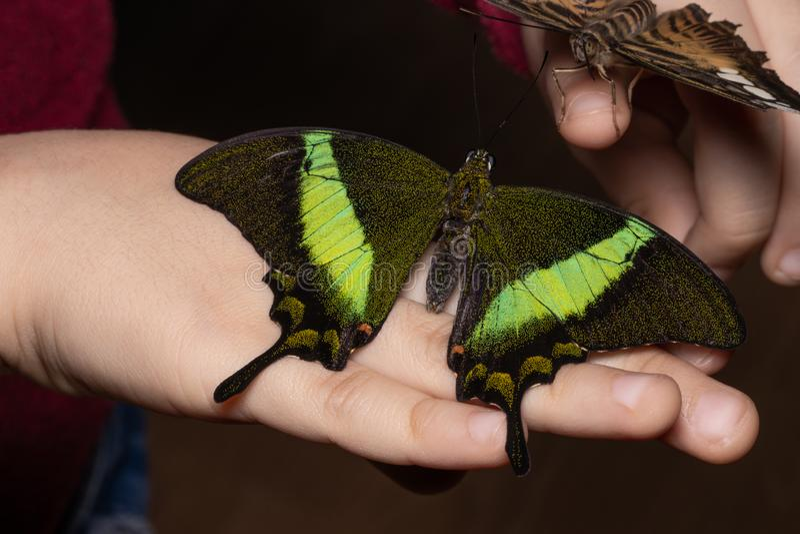 Fermez-vous vers le haut du papillon sur la main de femme Beauté de nature photos libres de droits