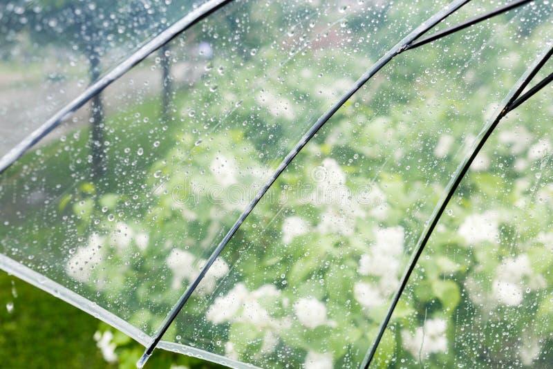 Fermez-vous vers le haut du parapluie transparent avec des baisses de l'eau pendant la pluie avec l'arbre vert de feuilles sur le images stock