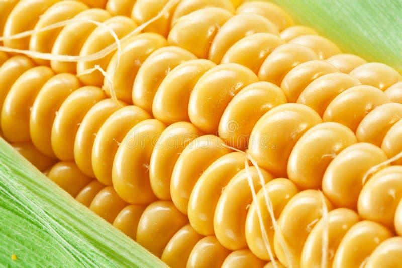 Fermez-vous vers le haut du projectile du maïs. images stock