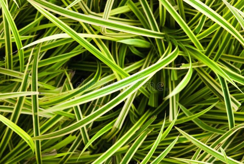 Fermez-vous vers le haut du sabot vert de feuille pour le fond Lames fraîches de vert Isolat sur le fond blanc photo libre de droits