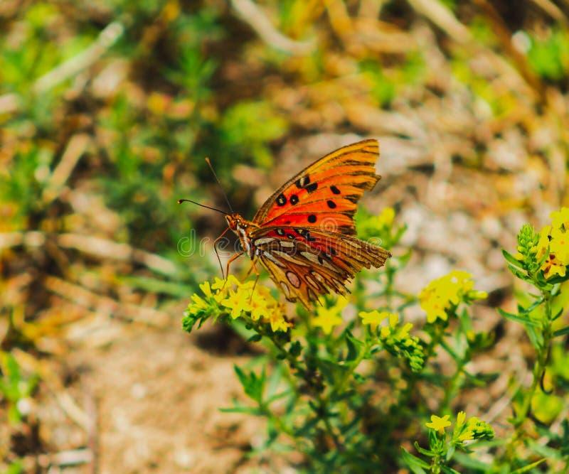 Fermez-vous vers le haut du tir d'un beau papillon photos stock