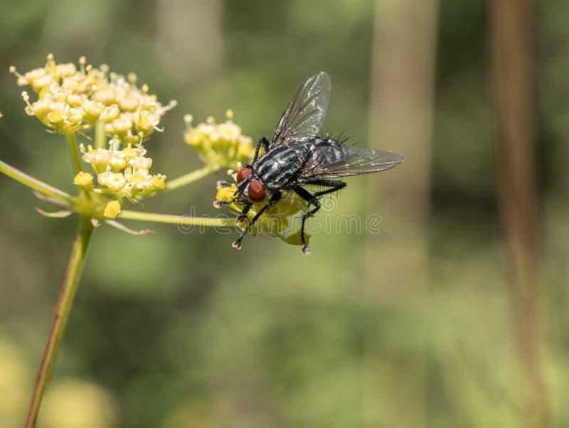 Fermez-vous vers le haut du tir de la fleur jaune et volez Macro tir photo stock