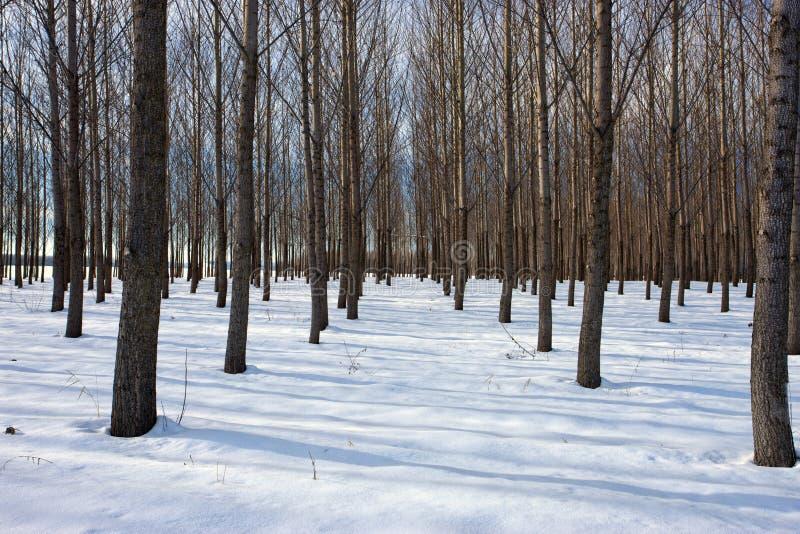 Fermez-vous vers le haut du verger couvert par neige. photo stock